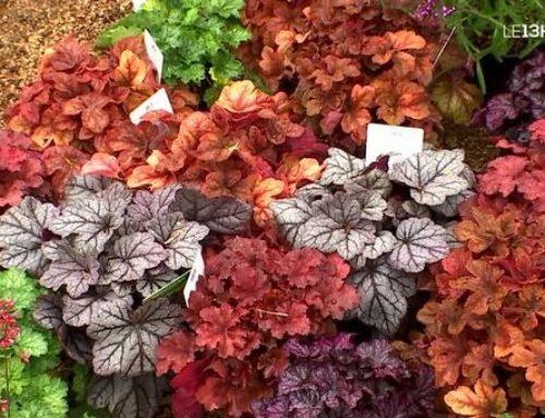 Les Journées des plantes réunissent les talents du jardin au château de Jossigny