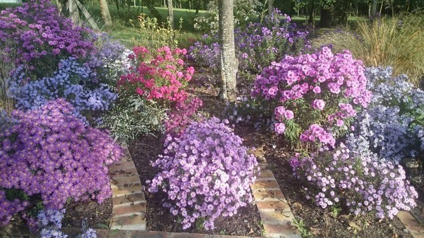 Plantes et déco de jardin, les meilleurs spécialistes viennent présenter leurs collections à Jossigny